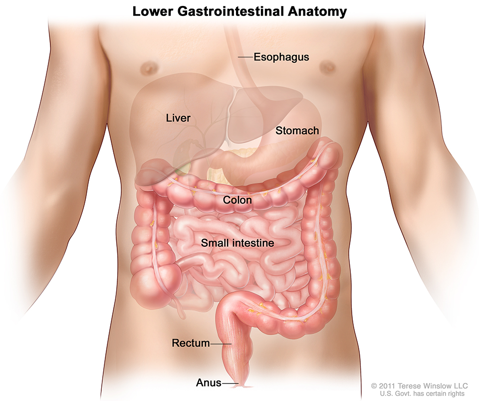 Abdominal Surgery | Oregon Surgical Specialists